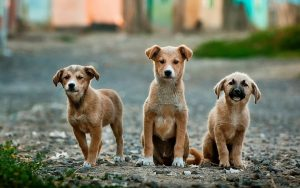 Dogs healed by haritaki