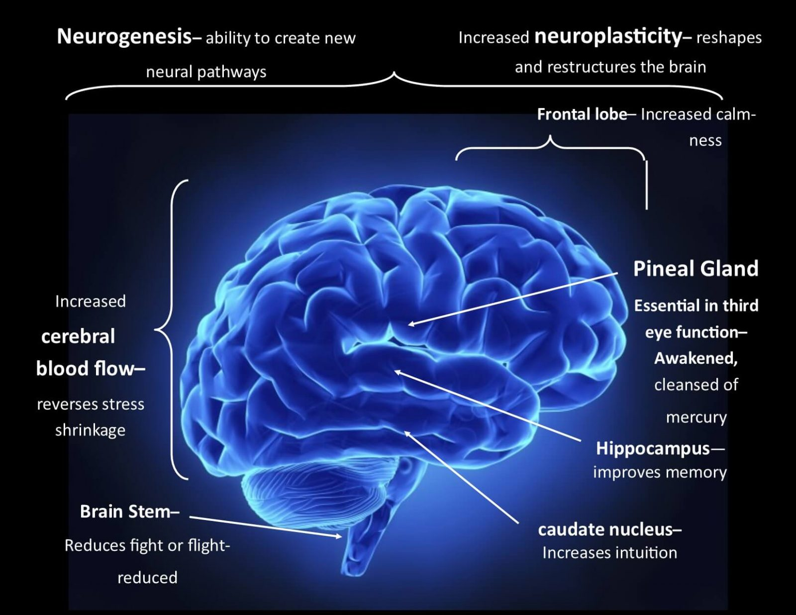 Brain function diagram haritaki and Nootropic brain function