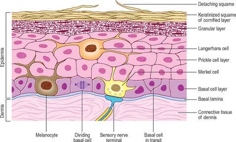 Haritaki heals skin rash