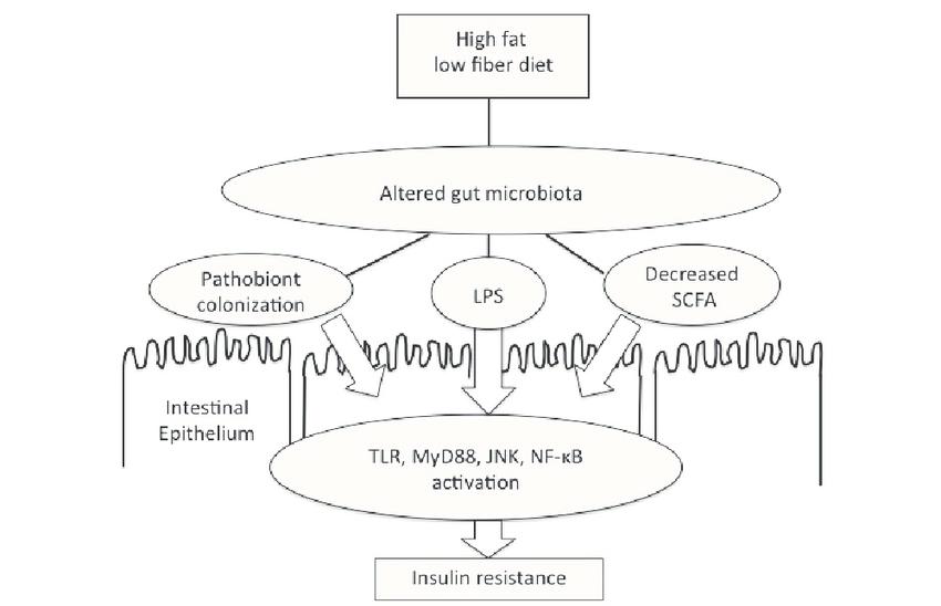 Haritaki and metabolic endotoxemia
