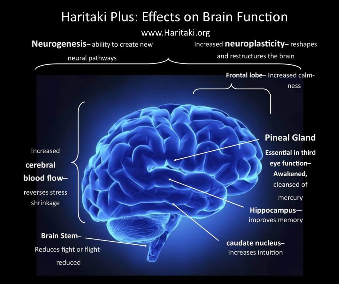 Diagram of how haritaki plus aids in increased brain function and awakening of the third eye