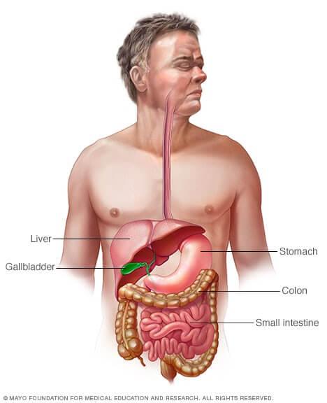 Haritaki helps indigestion diagram